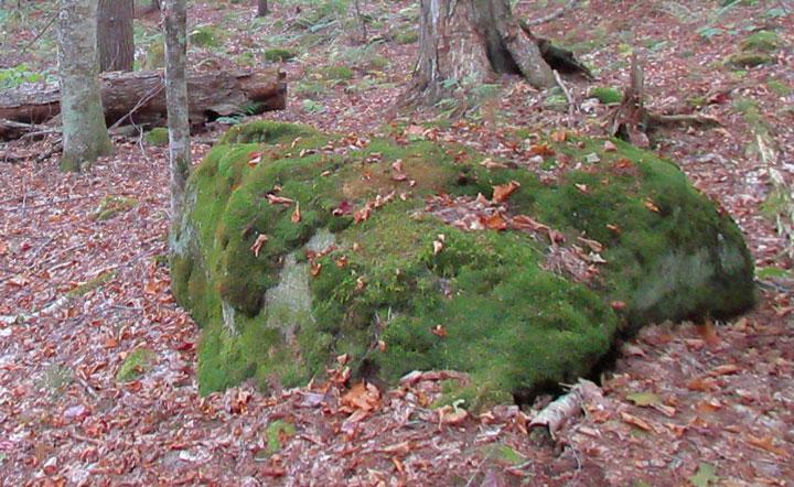 Cordingly Preserve Moss Covered Rock Lake Sunapee Living